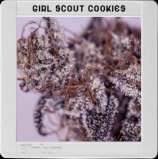 Image Result For Scout Flower