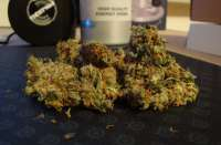 Bild von SuperSkunkLover (White Widow)