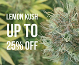 Lemon Kush now 25% off!