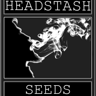 Logo Headstash Seeds