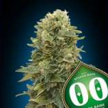 00 Seeds Bank Auto Afghan Mass XXL