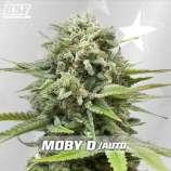 Moby-D XXL Auto