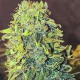 Baked Beans Cannabis Seeds Skunk #1