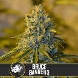 Bruce Banner #3