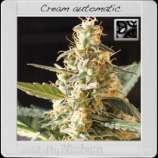 Cream Automatic