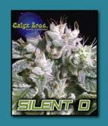 Calyx Bros. Seed Co. Silent D