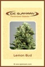 Lemon Bud