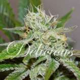 Delicious Seeds Original Juan Herrer