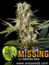 Missing in Barcelona