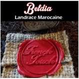 Beldia