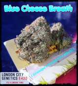 London City Genetics Blue Cheese Breath