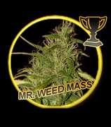 Mr. Weed Mass
