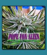 Pacific NW Roots Pope Von Alien