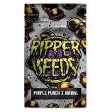 Purple Punch x Animal Cookies