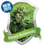 Royal Queen Seeds Diesel Automatic
