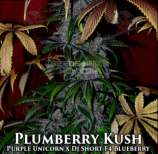 Second Generation Genetics Plumberry Kush
