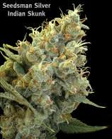Seedsman Indian Skunk