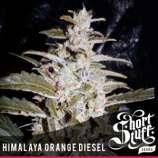 Himalaya Orange Diesel