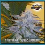 Space GenetiX Critical Strawberry