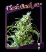 Flash Back #2
