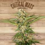 The Plant Critical Mass