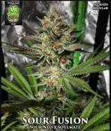 Trichome Jungle Seeds Sour Fusion