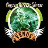 Venus Genetics Super Cheese Haze