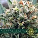 Supreme Lemon