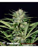 Xtreme Seeds Co. Afghan Shadow