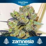 Zamnesia Critical Cheese Automatic