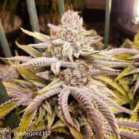 Beyond Top Shelf Sugar Cube F2 - ein Foto von Jeffrey