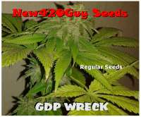 New420Guy Seeds GDP Wreck - ein Foto von New420Guy