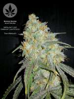 Ripper Seeds Acid Dough - ein Foto von pineappleltd
