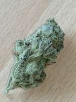Sweet Seeds Green Poison - ein Foto von BudBro