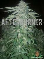 Third Eye Genetics Afterburner - ein Foto von ThirdEyeGenetics