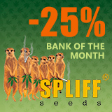 - 25% for Spliff Seeds